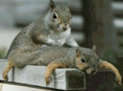 "Watch ""Rescuing  Baby Squirrels Outside – Reunion with Mother After 4 days (Happy ending story)"" on YouTube"