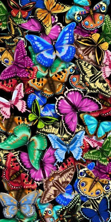 """Watch """"Butterflies"""" on YouTube"""