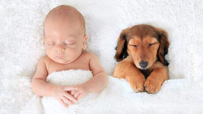 """""""BABIES AND PUPPY DOGS!"""