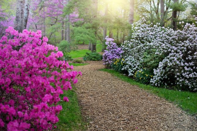 Rhododendron Garden  ~ Australia