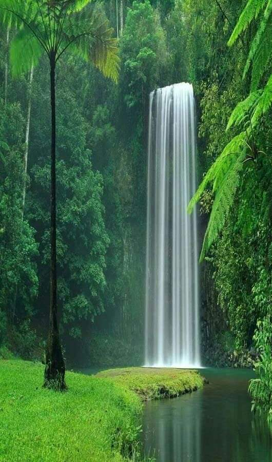 What amazingly serene greenery and perfect waterfall at Millaa Millaa Falls, Queensland