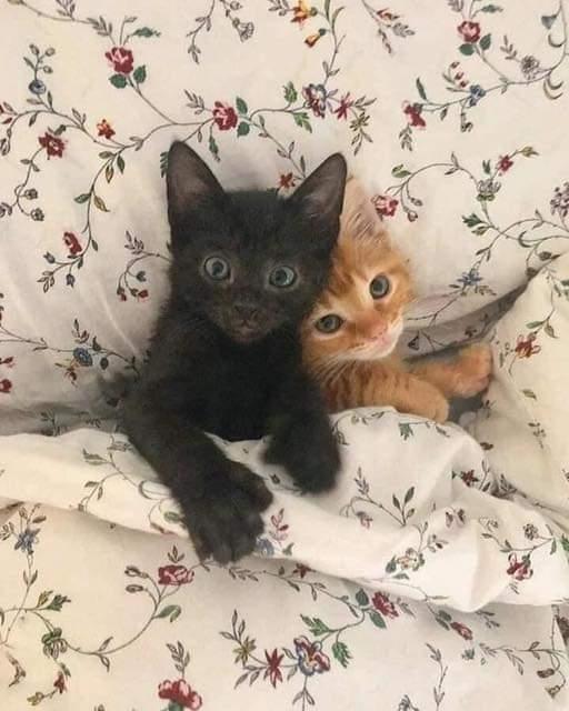 Greek Romeo and Juliet ~ Kittens in Love ❤